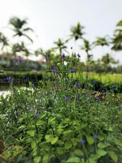 violet flowers smile along