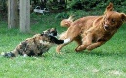 dog+vs+cat